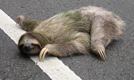 sloth202pk2